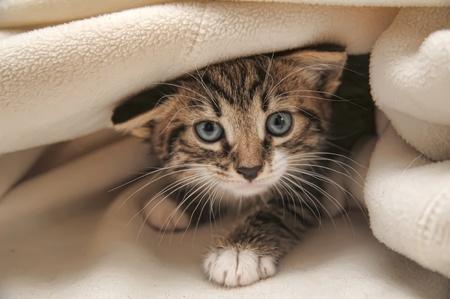 Adopter un chat, c'est…pour la vie !