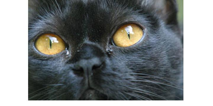 Chat noir (ou pas) : à bas les malédictions  imbéciles, vive les superstitions positives !