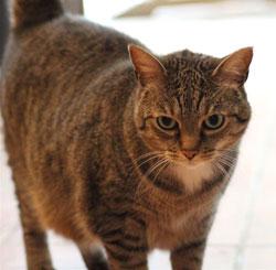 Chat de gouttière, chat de luxe !