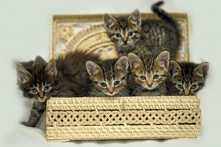 vous voulez adopter un chaton ou un chat nos conseils pour vous y aider. Black Bedroom Furniture Sets. Home Design Ideas