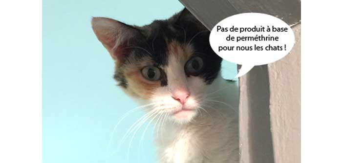 chat tout sur les chats les chatons comment mieux les comprendre. Black Bedroom Furniture Sets. Home Design Ideas