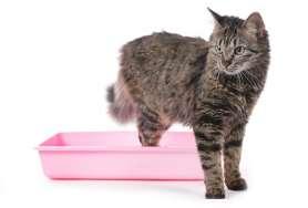 nos conseils pour mieux vivre avec son chat. Black Bedroom Furniture Sets. Home Design Ideas