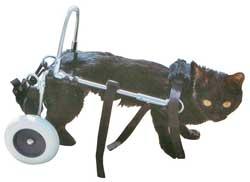 Chariots pour chats handicapés des membres postérieurs.