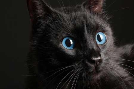 Si vous devez adopter un chat, pourquoi ne pas en choisir un noir