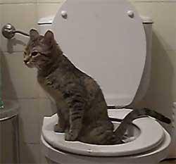 Le chat fait ses besoins dans mes toilettes, quel pied !