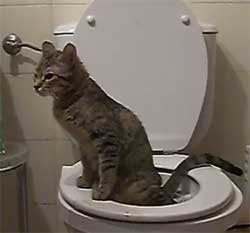litiere chat pue