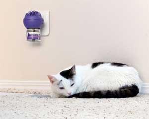 Les situations stressantes pour les chats, leurs conséquences et comment y faire face.