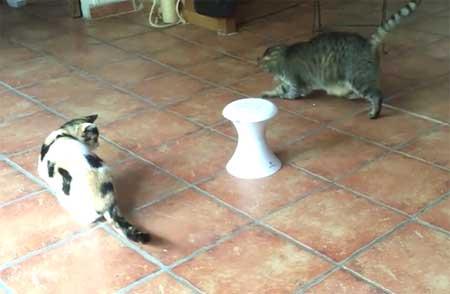 Froli Cat Dart Duo : le maître des jeux (du chat)…