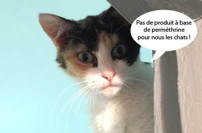 Attention la perméthrine contenue dans des produits de la maison peut être mortelle pour le chat.