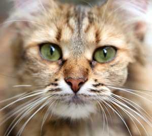 Le match des sens, chats contre hommes, quatre...à deux !