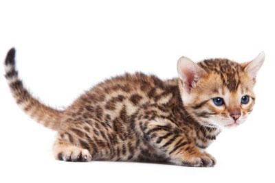Les prénoms de chat en L pour 2015
