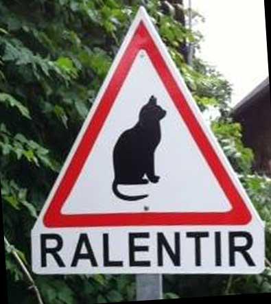 Beaucoup trop de chats écrasés sur les routes, une solution pour limiter cela ?