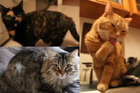 Des chatons de pères différents dans la même portée ? C'est possible..