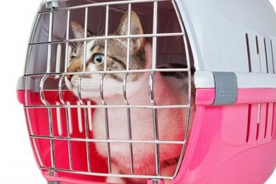 Faire voyager son chat, les règles d'or et les précautions à prendre...