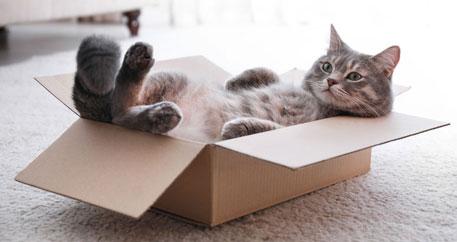 5 bonnes raisons d'adopter un chat au lieu d'en acheter un.