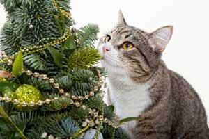 Allez-vous passer Noël avec votre chat ?