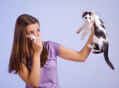 Il ne faut pas abandonner son chat  si l'on découvre avoir des allergies.