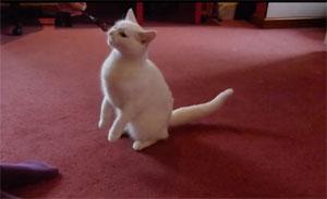 Éduquer votre chat : Assis !