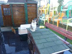 L'activité de bénévole pour chats n'est pas une sinécure.