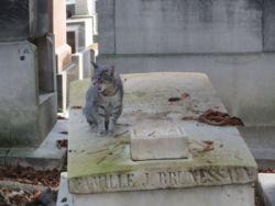 Assurer l'avenir de son chat en cas de décés…