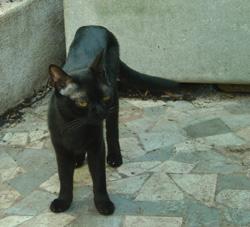 Les dangers de l'Extérieur pour le chat