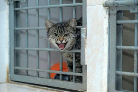 Rappelons les obligations des maires en ce qui concerne les chats errants