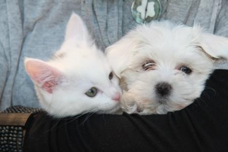 Faire cohabiter chiens et chats