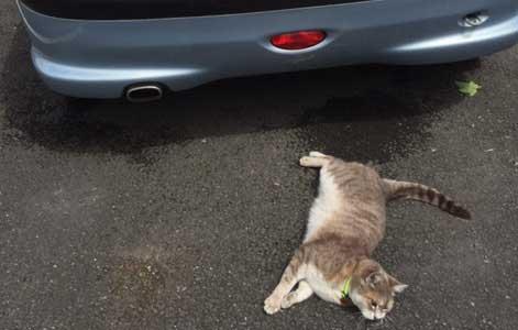 Le chat et l'extérieur : vaste question ! par Marie-Hélène Bonnet (1)
