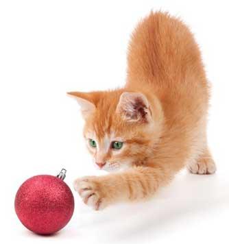 Vidéo : Votre chat vous attaque le soir ! Damned !