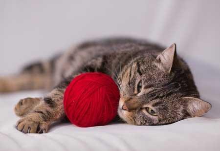 Faire du sport est vital pour les chats.