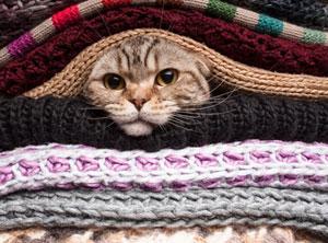 Un chat appréciant la laine.