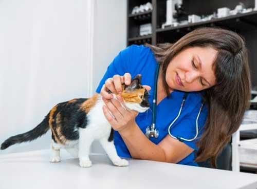 Diagnostiquer puis soigner un chat malade