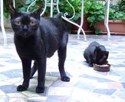 donnez une seconde chance aux chats noirs en en adoptant un. Black Bedroom Furniture Sets. Home Design Ideas