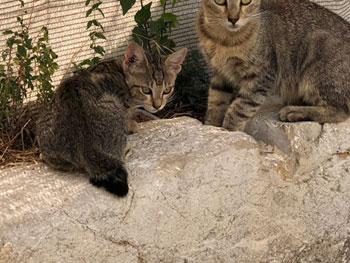 L'Eté de tous les dangers pour les chats