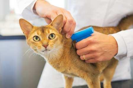 3 bonnes raisons de procéder à l'identification de son chat.