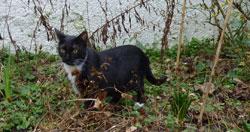 La chasse et le chat