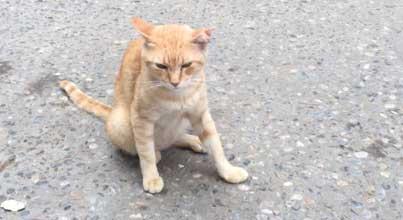 Comment apprivoiser un chat sauvage ? (1) ?