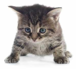 Les prénoms de chat en J pour 2014
