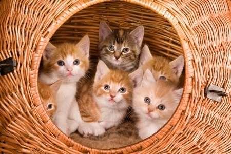 Les prénoms de chat en M pour 2016.