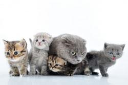 Quelques bons conseils pour choisir son chaton dans une port e - Combien de portee par an pour un chat ...