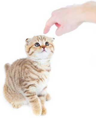 Comment dire non à son chat par Marie-Hélène Bonnet (1) ?