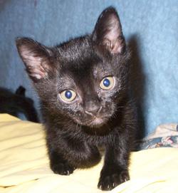 Les prénoms de chat en I pour 2013