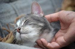 La gestuelle est importante pour parler à son chat.
