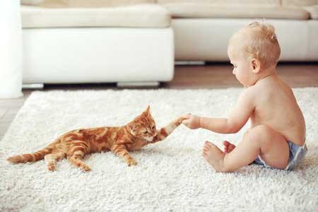 Les chats, les bébés et les enfants par Marie Hélène Bonnet (1).