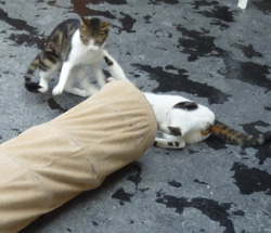 Le chat et le jeu