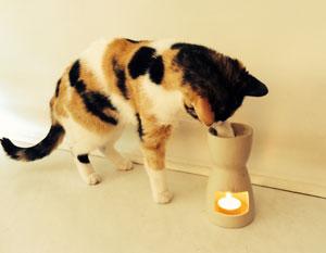 Les huiles essentielles sont très toxiques pour les chats