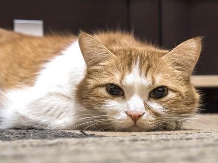 Les chats et la dépression par Marie-Hélène Bonnet (1)