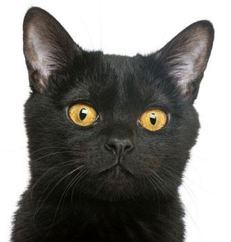 Stéphane Mallarmé parle magnifiquement du chat...