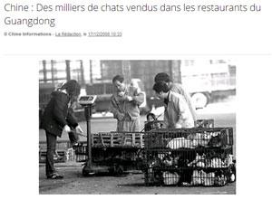 Non ce n'est pas une légende on mange les chats en chine