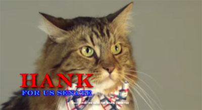 Hank, le chat qui voulait être sénateur...